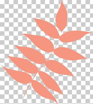 Leaf Petal Bougainvillea Spectabilis PNG