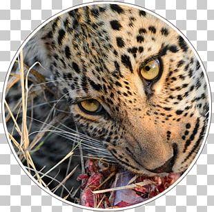 Leopard ISimangaliso Wetland Park Kruger National Park Garden Route National Park PNG