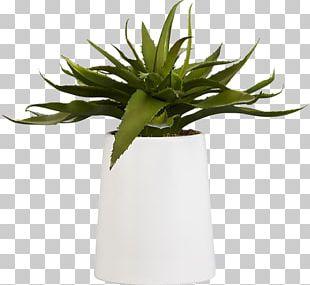 Aloe Vera Houseplant Succulent Plant Flowerpot Artificial Flower PNG