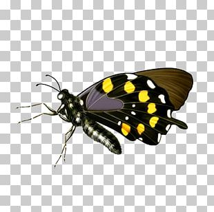 Butterfly Transparency And Translucency Flash Video PNG