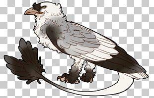 Eagle Fauna Hawk Beak PNG