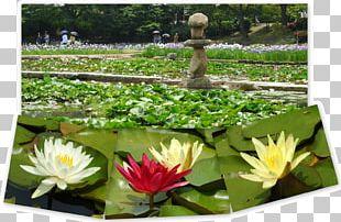 Landscaping Botanical Garden Flora Aquatic Plants PNG