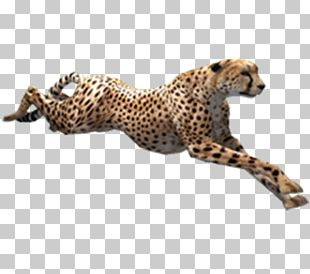 Cheetah Zoo Tycoon 2 PNG