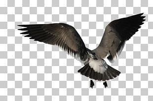 Bird Angel Wing PNG