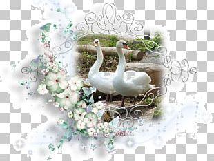 Water Bird PNG