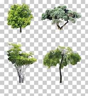 Macrophanerophytes Shrub Garden Tree Motoevakuator PNG