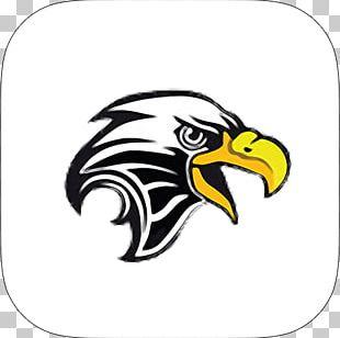 Bald Eagle Golden Eagle PNG