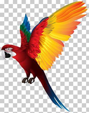Bird True Parrot Macaw PNG