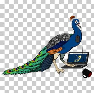 Bird Feather Landkreuzer P. 1000 Ratte Beak Peafowl PNG