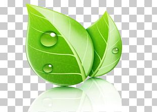 Leaf Ecology Natural Environment Illustration PNG