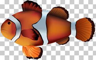 Clownfish PNG