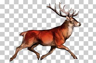 White-tailed Deer Irish Elk Red Deer Reindeer PNG