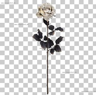 Twig Rose Family Plant Stem White PNG