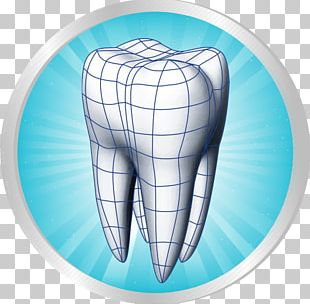Human Tooth Dentistry Scientific Modelling Periodontium PNG
