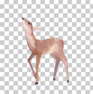 Deer Illustration PNG