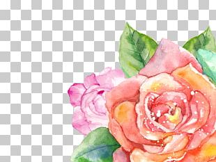 Flower Watercolor Painting Garden Roses Floral Design Transparent Watercolor PNG