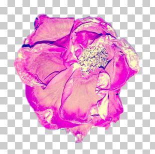 Garden Roses Cut Flowers Artist PNG