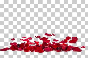Rose Petal Stock Photography Flower Stock.xchng PNG