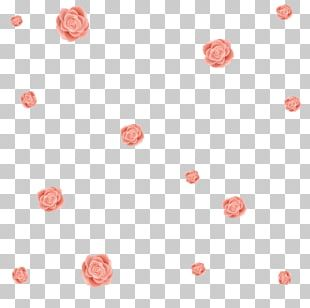 Flower Beach Rose Petal PNG