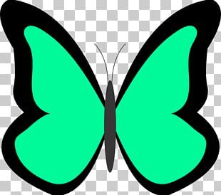Butterfly Green Free Content PNG