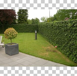 Hedge Wall Common Ivy Fence Garden PNG