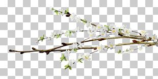 Flower Tree Willow PNG