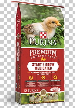 Chicken Poultry Feed Purina Mills Land O'Lakes PNG