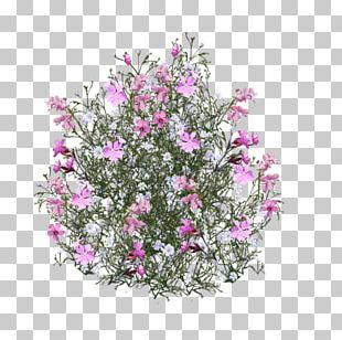 Cut Flowers Rose Pink PNG
