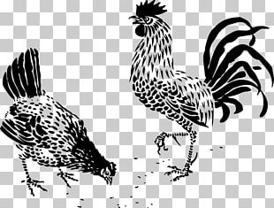 Dorking Chicken Rooster Drawing Poultry Galliformes PNG
