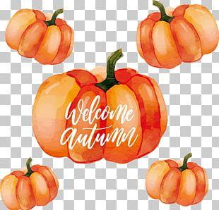 Calabaza Habanero Pumpkin Watercolor Painting PNG