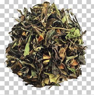 Sencha Green Tea White Tea Gyokuro PNG