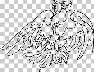 Bird Of Prey Line Art Drawing PNG