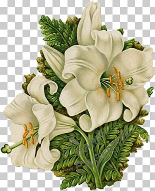 Floral Design Cut Flowers Flower Bouquet Rosaceae PNG