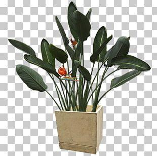 Flowerpot Plant PNG