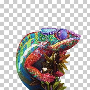 Chameleons Drawing Colored Pencil Sketch PNG