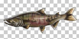 Chinook Salmon Keyword Tool Alaska Male Reproductive System PNG