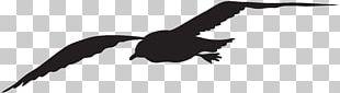 Gulls Silhouette Bird PNG