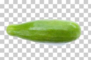 Cucurbita Maxima Cucumber Wax Gourd Winter Squash PNG