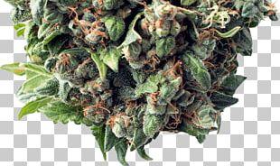 Arizona Cannabis Society Marijuana Cannabis Sativa Medical Cannabis PNG