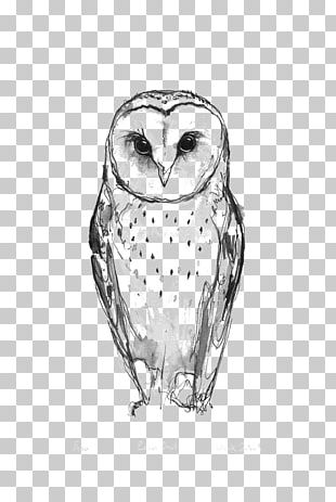 Barn Owl Tattoo Idea Drawing PNG