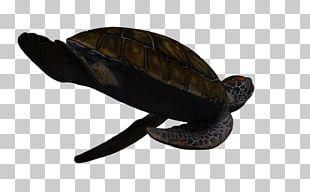 Box Turtles Green Sea Turtle PNG