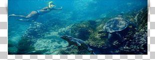 Loggerhead Sea Turtle Coral Reef Underwater PNG