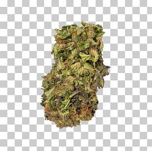 Kush Medical Cannabis Cannabis Sativa Project MKUltra PNG