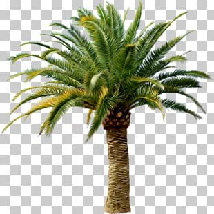 Palm Trees Transparency Portable Network Graphics PNG