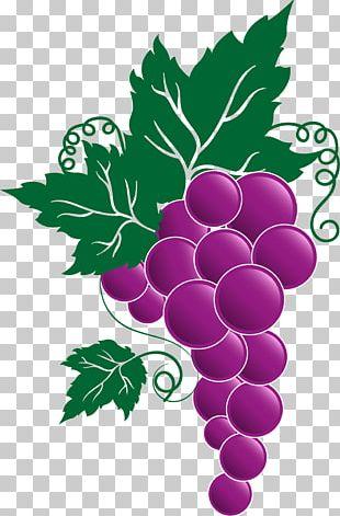 Wine Beer Italian Cuisine Theatre Drive Self Storage Grape PNG