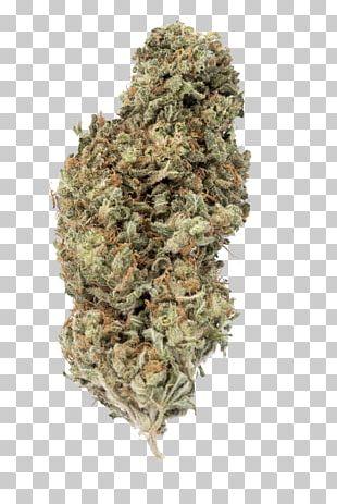 Cannabis Sativa Ssp. Sativa Kush White Widow Seed PNG