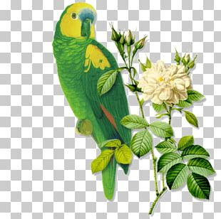 Kiss Friendship Love Bird Kindness PNG