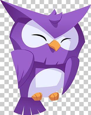 Owl Photography Bird PNG