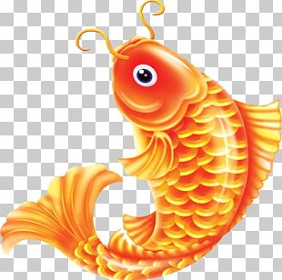 Common Carp Goldfish PNG