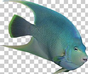 Angelfish Marine Biology Coral Reef Fish Marine Mammal PNG